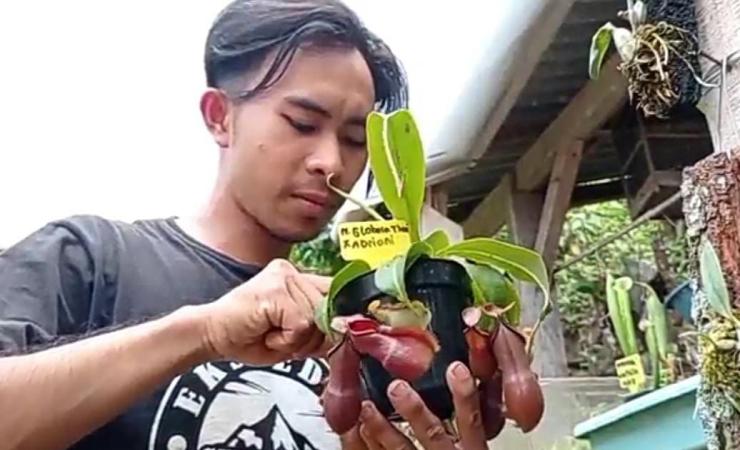 Pemuda di Madiun Koleksi Tanaman Pemakan Serangga