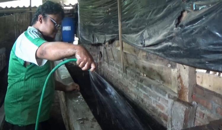 Budidaya Cacing, Penyandang Disabilitas di Magetan Kebanjiran Orderan