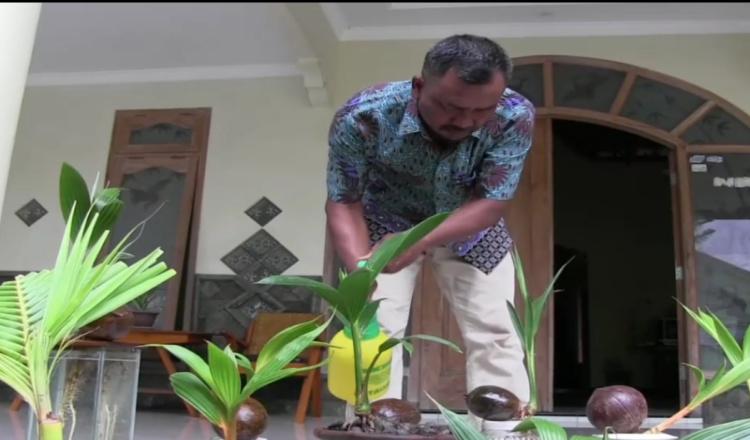 Mantan TKI Asal Madiun Sukses Kembangkan Bonsai Kelapa