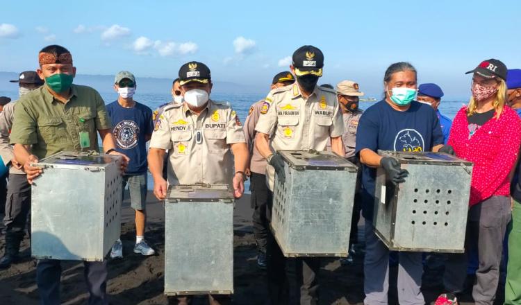 Pemkab Jember Lepas 40 Kera dan Ular Piton di Nusa Barong