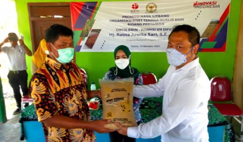 ORTN BRIN dan Komisi VII DPR RI Promosikan Padi Varietas Inpari Sidenuk di Tuban
