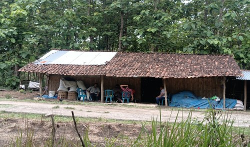 Memprihatinkan, Seorang Guru di Ngawi Bersama 3 Anaknya Tinggal Seatap dengan Kambing