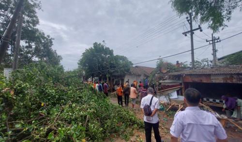 Pohon Beringin Tua di Lojajar Bondowoso, Tumbang Timpa Warok dan Motor